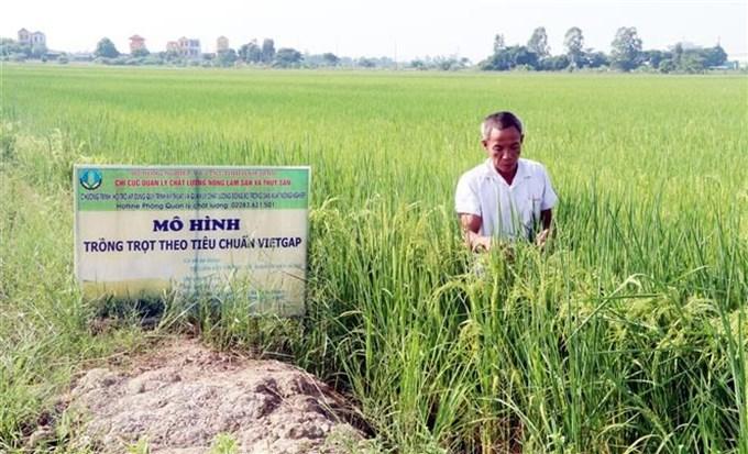 Cải thiện chất lượng tăng sức cạnh tranh của gạo Việt