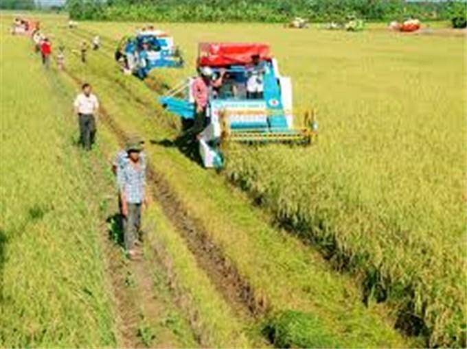 Chiến lược sản xuất lúa gạo thông minh của Việt Nam