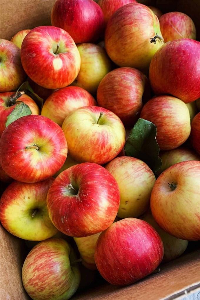 Chuyên gia khuyên chị em ăn 7 loại quả này vào buổi sáng để giảm cân, giữ eo thon bền vững