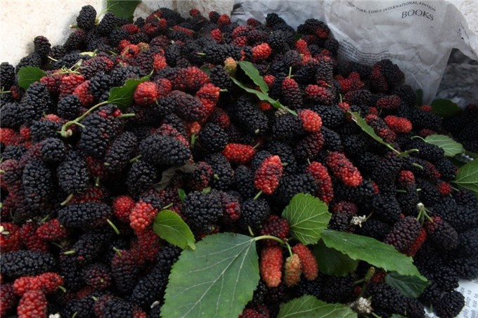 When the time of spring and summer intersection is when fruits such as tea bars, mulberries, apricots, plums ... appear on the street, those things appeal to many diners.Income from early summer fruits