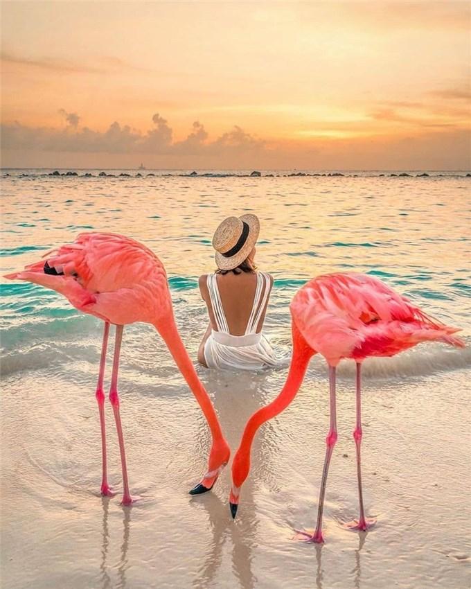 Come to the Aruba flamingo island in the CaribbeanCome to the Aruba flamingo island in the CaribbeanCome to the Aruba flamingo island in the Caribbean