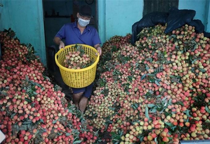 Bộ trưởng Lê Minh Hoan: Xây dựng mô hình tiêu thụ nông sản chính quy