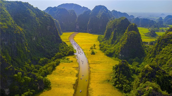 Mơ màng giữa sắc vàng thơ mộng của cánh đồng 'đẹp nhất Việt Nam' mùa lúa chín
