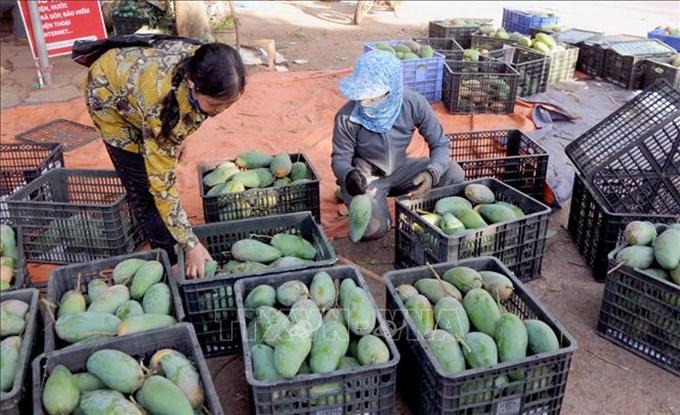 Doanh nghiệp có thể 'đặt hàng' vùng nguyên liệu nông sản