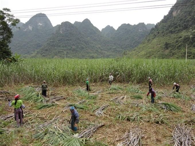 Bộ Công Thương áp thuế chống bán phá giá với đường mía từ Thái Lan