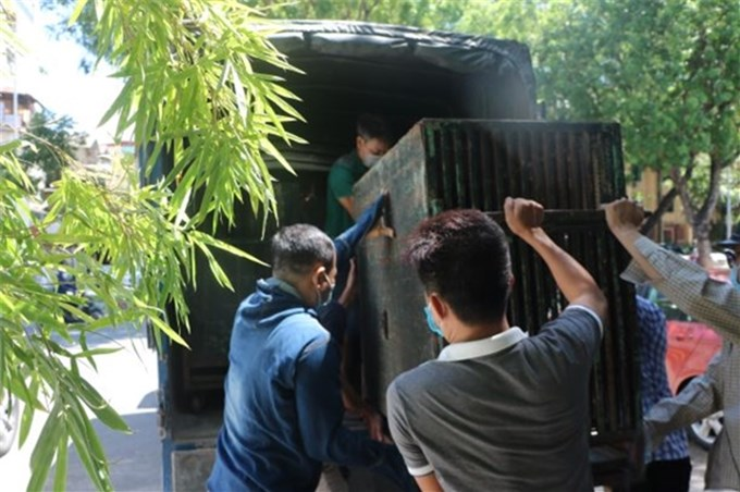 Transferring 4 bears to Vietnam Bear Rescue CenterPeople's Army Online - On June 15, Animals Asia rescued and transferred four bears at the Hanoi Central Circus