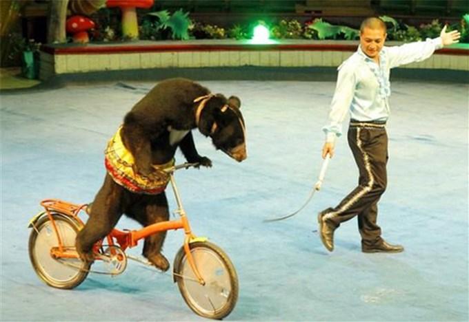 Liên đoàn xiếc Việt Nam dừng sử dụng động vật hoang dã trong các tiết mục biểu diễn