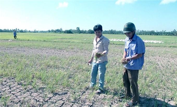 Việt Nam trăn trở tìm giải pháp cho mùa khô khắc nghiệt ở đồng bằng sông Cửu Long
