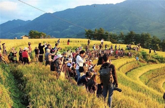 Ruộng bậc thang Mù Cang Chải mùa lúa chín hấp dẫn du khách