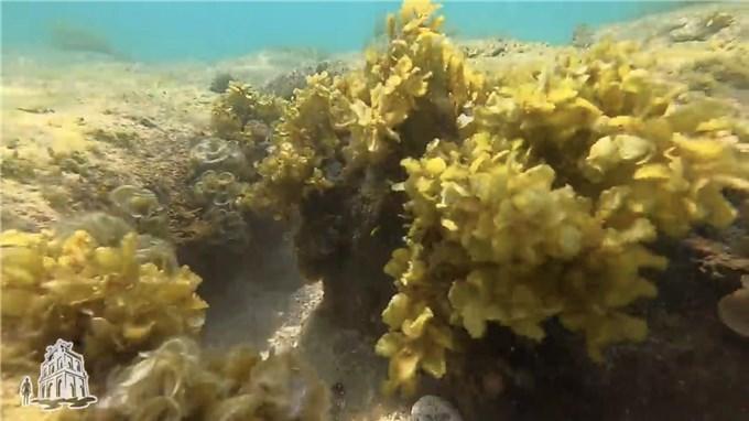 Bí ẩn bức tường thành cổ giữa biển Quy Nhơn