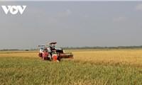 Thương hiệu gạo Việt Nam được khẳng định tại các thị trường khó tính