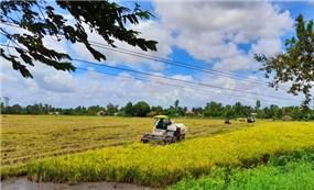 Chiến lược xuất khẩu gạo khôn ngoan của Việt Nam