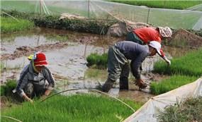 Vừa chống dịch, vừa sản xuất vụ xuân