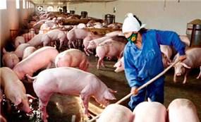 Quy định về xử lý vi phạm trong lĩnh vực chăn nuôi và chất thải chăn nuôi