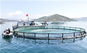 Thủy sản Việt Nam hướng đến chiến lược phát triển mới