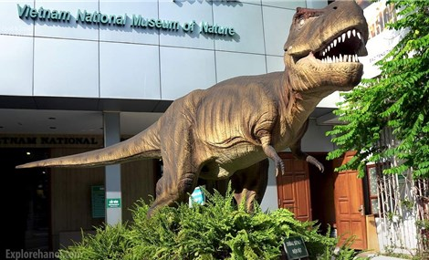Vietnam National Museum of Nature - ideal destination for nature lovers and researchers