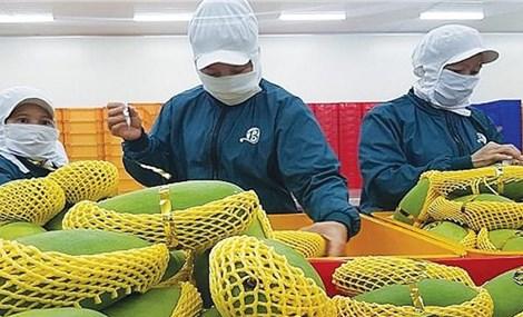 Vietnamese exports to US enjoy sharp increase