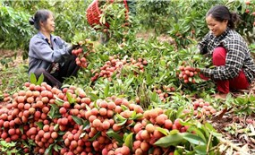 Vietnam stands ready to boost agricultural exports amid COVID-19