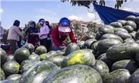 Giải cứu dưa hấu ế của nông dân Gia Bình Bắc Ninh