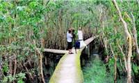 Sải bước trên con đường xuyên rừng tràm đẹp nhất Việt Nam