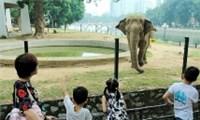 Câu chuyện từ con voi