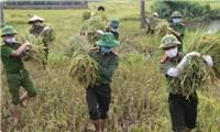 Lực lượng vũ trang hỗ trợ nông dân thu hoạch nông sản