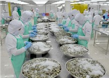 Shrimp exports swell despite virus