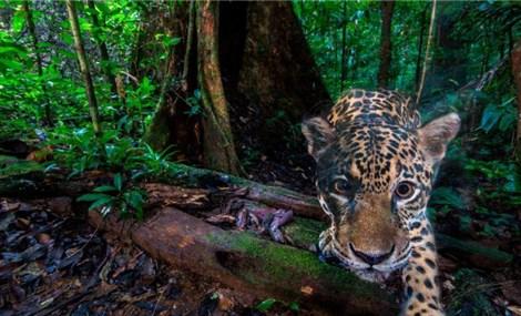 Tiếp thêm hy vọng bảo tồn động vật hoang dã ở Việt Nam nhờ thiết bị bẫy ảnh