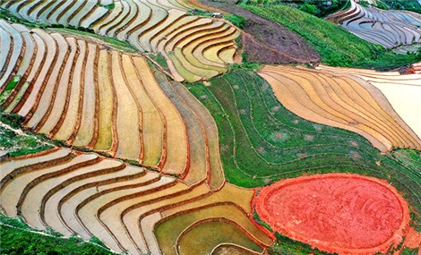 Yen Bai's new terraced field complex attracts tourists and photographers