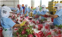 EVFTA tạo thuận lợi cho doanh nghiệp ChâuÂu nhập khẩu nông sản