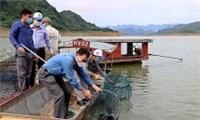 Hòa Bình: Thả 35.000 con cá giống tái tạo nguồn lợi thủy sản vùng hồ.