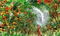 Xây dựng 5 vùng nguyên liệu nông sản trên cả nước