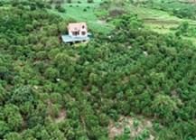 Sơn La: Tập trung ứng dụng khoa học kỹ thuật trong sản xuất nông nghiệp