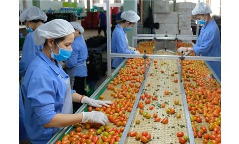Thị trường thực phẩm từ thực vật phát triển nhanh ở Châu Âu