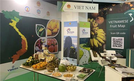 Vietnamese specialty fruits introduced at famous Italian fruit fair