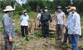 Tỉnh ủy Phú Yên yêu cầu xử lý nghiêm các cá nhân, đơn vị liên quan các vụ phá rừng