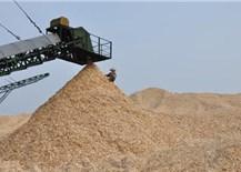 Xuất khẩu dăm gỗ 7 tháng đầu năm đạt hơn 1 tỷ USD tăng 22,9%