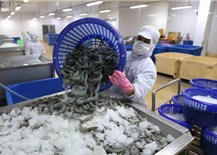 Xuất khẩu thủy sản quý 4/2021 dự báo khởi sắc