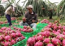 Ngành nông nghiệp thúc đẩy khôi phục sản xuất