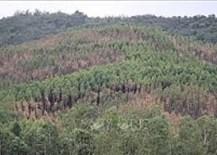 Khu vực đất rừng phòng hộ tại Bình Định giáp ranh Gia Lai bị xâm chiếm