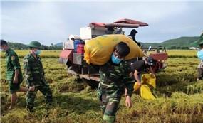 Bộ đội gặt lúa giúp người dân vùng giãn cách