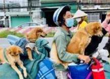 Vụ chính quyền địa phương tiêu hủy 15 chú chó: Vật nuôi có làm lây lan Covid-19 hay không?