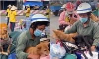 Đừng vô cảm - Thông điệp từ câu chuyện 15 chú chó