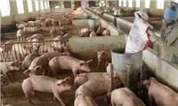 """Giá lợn hơi chạm đáy, thịt lợn ở chợ và siêu thị vẫn""""đứng im"""""""
