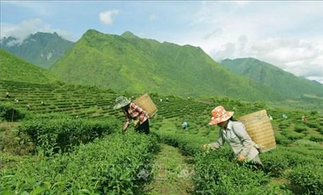 Triển khai 10 dự án chương trình mục tiêu quốc gia vùng miền núi