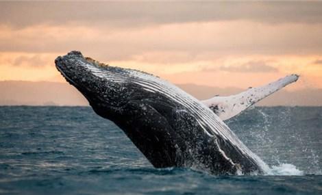 5 địa điểm ngắm cá voi đẹp nhất châu Âu