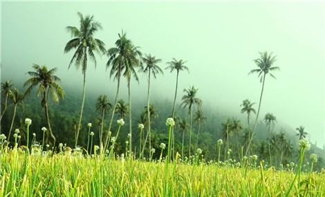 Romantic scenes on Ly Son Island