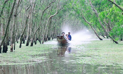 Green mangrove forests in flooding season