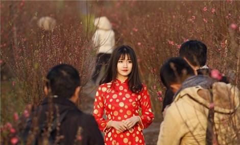 Reuters select peach blossom portrait pic for Vietnam