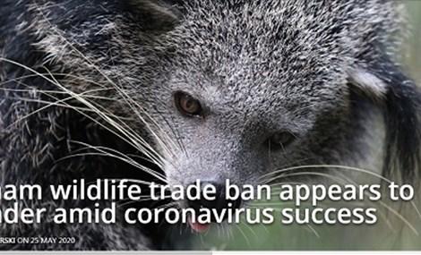 Vietnam wildlife trade ban appears to flounder amid coronavirus success